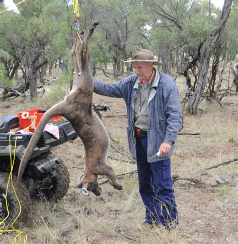 Winch Stand by Hunting Kangaroos