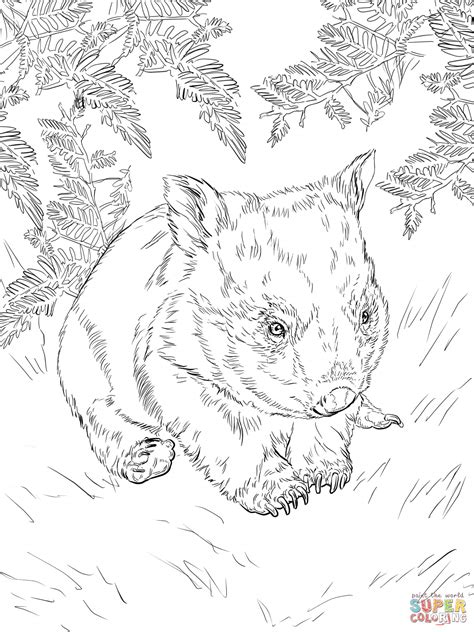 baby wombat coloring page  printable coloring pages