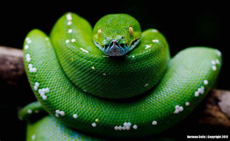 python set wallpaper wallpapersafari