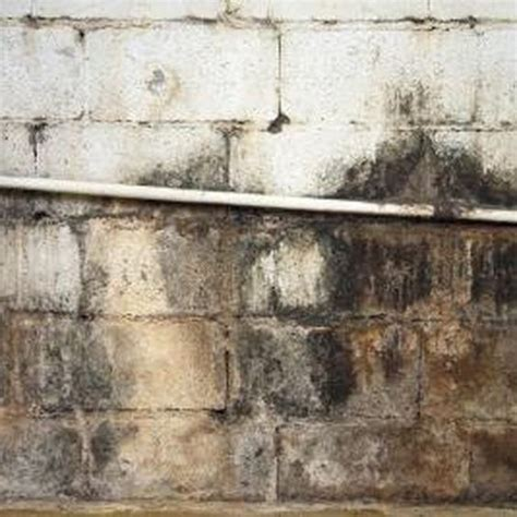 Disinfecting Basement Walls And Floor With - best 25 cleaning mold ideas on diy mould