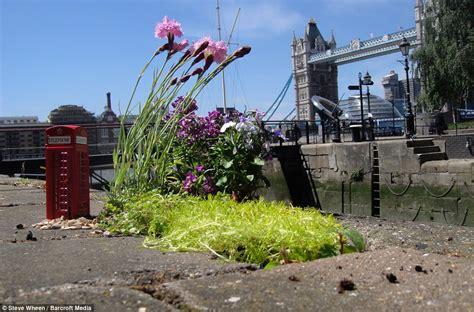 Guerilla Gardening by Guerrilla Gardener Transforms Potholes Into Miniature