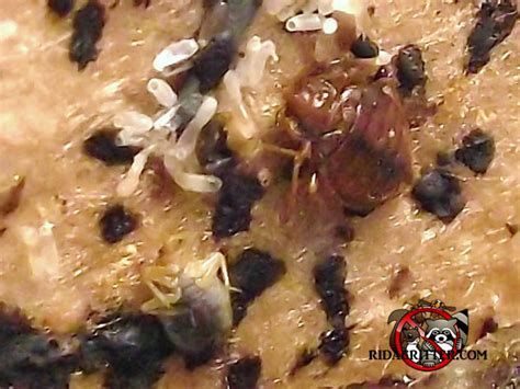how to take control in bed dead bed bugs
