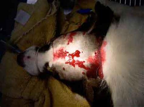 grand mal seizure in dogs durkes veterinary clinic seizures