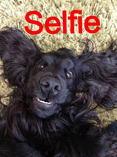 my me chronicles of a cocker spaniel books 1000 images about cocker spaniels on