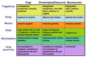 characteristics of fungi mycology all you need to know