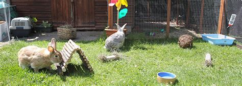 Outside Rabbit Hutch The Environmental Needs For Keeping A Rabbit Rspca