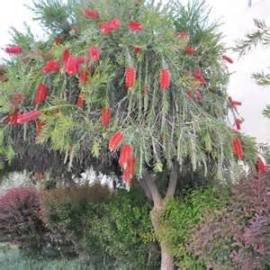 arbuste pour massif liste ooreka