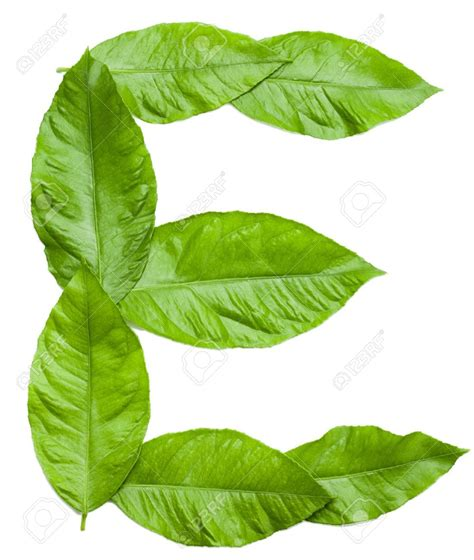 Natur E stock photo letter e created from fresh green leaves