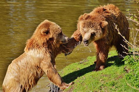 images water nature forest play fur mammal