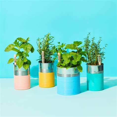 herbs  grow  year  indoor herb garden ideas