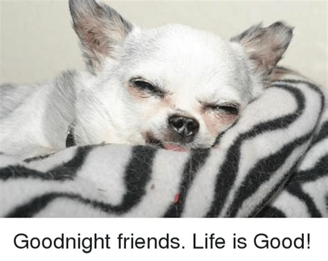 Life Is Good Meme - goodnight friends life is good meme on sizzle