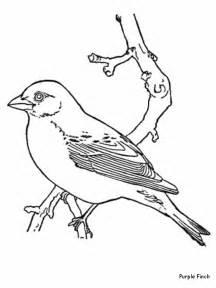 bird color az coloring pages