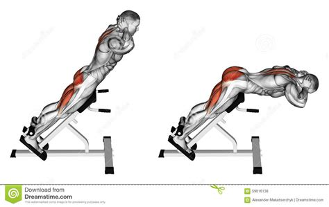 Beautiful Hyperextension Bench #3: Exercising-hyperextension-bodybuilding-target-muscles-marked-red-initial-final-steps-59616138.jpg