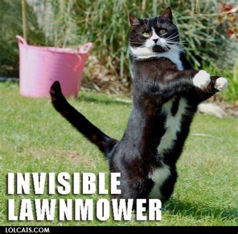 Invisible Cat Memes - invisible lawnmower cat meme cat planet cat planet