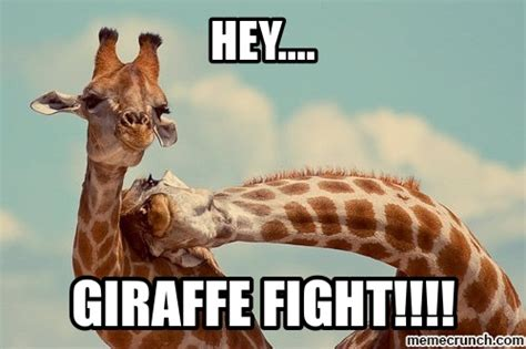 Meme Giraffe - giraffe fight