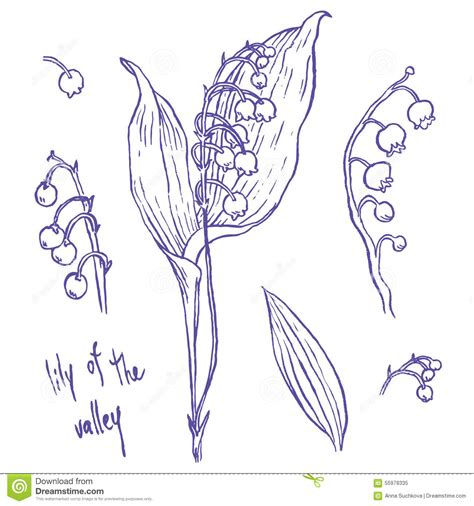 how to draw hands by lily draws on deviantart lily of the valley stock vector illustration of flora