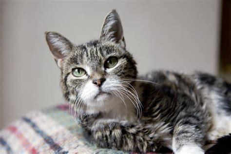 alimentazione gatto anziano gatto anziano alimentazione disturbi malattie e altri
