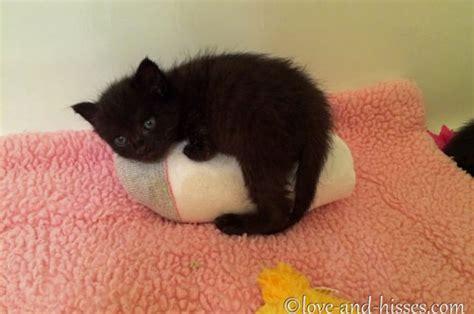 sock cat spay diy heating pad for pets jacksonville humane