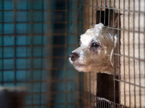 puppy mill rescue ms puppy mill rescue site 2 183 a humane nation