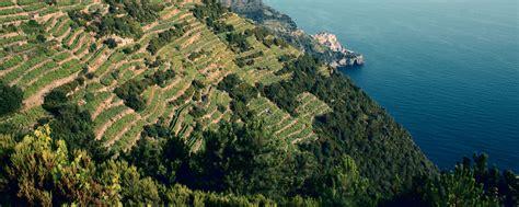terrazzamenti liguri vini della liguria visit riviera