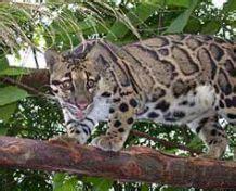 Kerangkeng Kucing macan dahan di beli rp 20 juta the aceh traffic