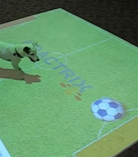 soccer interactive genius interactive floor display lets pets play soccer