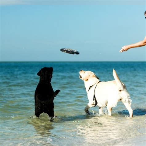 friendly beaches pet beaches in st pete clearwater visit st petersburg clearwater florida