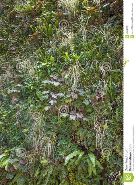 verde giardino parete verde giardino verticale fotografia stock