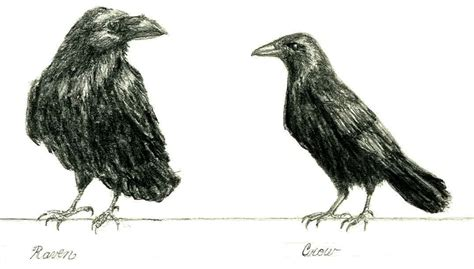 gothic divine magazine crows and ravens