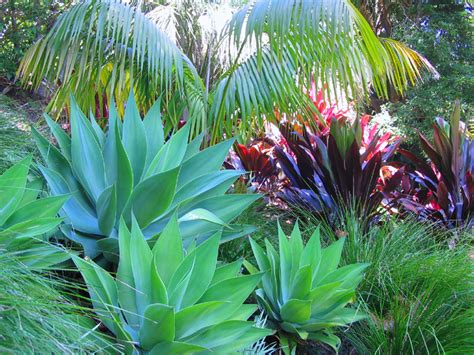 tropical backyard plants 1000 images about tropical gardens on pinterest