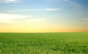Green Horizon Landscaping by Pics Photos Dessus De Cercueil Champ Tre Tournesol Bl M Res