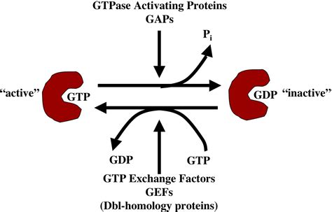 protein gap gtpase activating proteins gap proteins