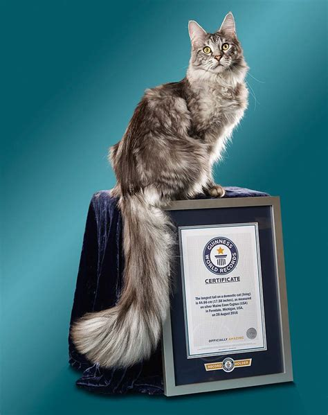 Video: Meet the two record breaking cats that live