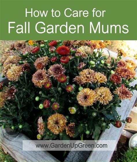 fall garden care 17 best images about flower gardening on
