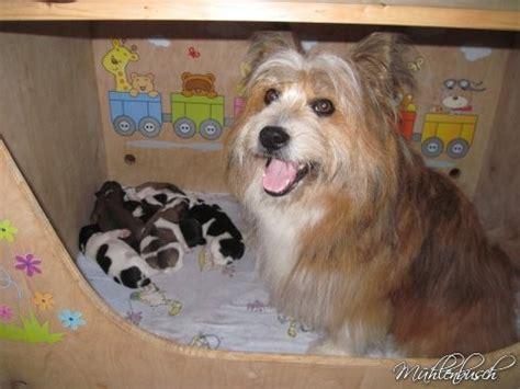 hund im schlafzimmer canilo welpen sind familienhunde in hausaufzucht die
