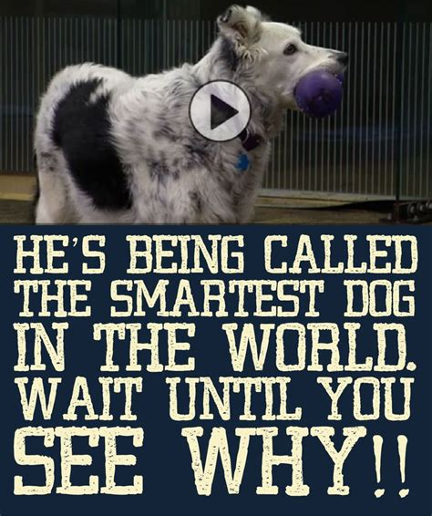 the smartest in the world and how they got that way he s being called the smartest in the world wait