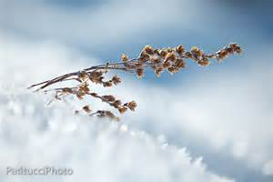 Landscape Photography With Macro Lens Winter Macro And Landscape Photography Alpsinsight