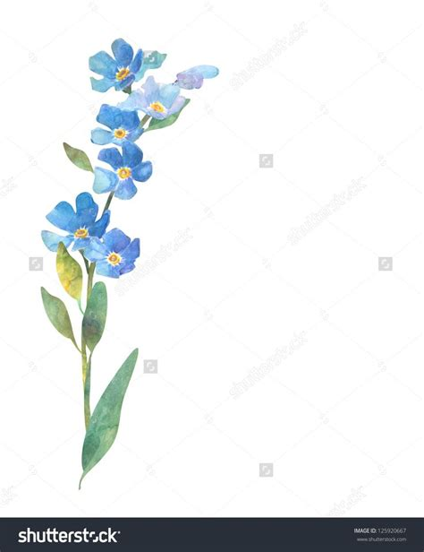 25  best ideas about Forget me not on Pinterest   Myosotis forget me not, Blue flowers and