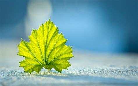 Kemeja Green Blue Leaf صور خلفيات أوراق الشجر جميلة عالية الدقة مداد الجليد