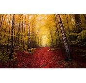 Nature Landscape Fall Red Leaves Path Yellow Trees