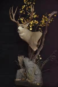 mule deer pedestal mounts mule deer pedestal taxidermy pedestal