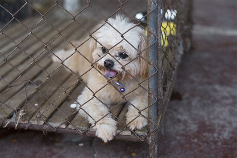 puppy mill laws arizona fights puppy mills with new alliance for homeless pets
