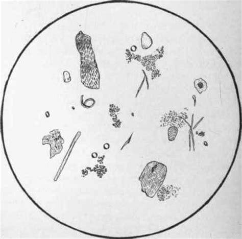 microscopical examination of the faeces