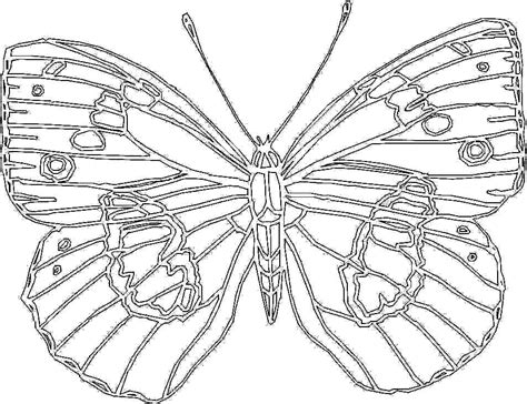 Big Coloring Pages by Big Butterfly Coloring Page For Printable