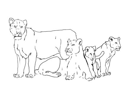 lion pride coloring pages pride of lions drawing www pixshark com images