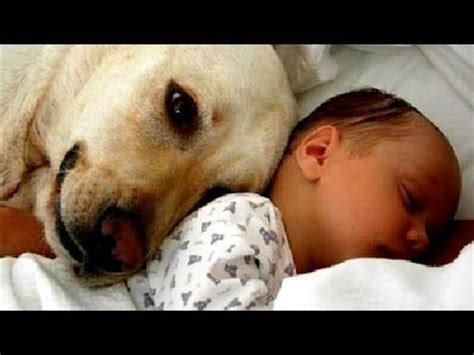 cute dogs and adorable babies compilation youtube cats and dogs meeting babies for the first time cute