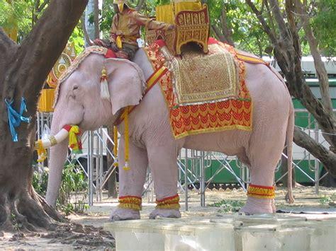 Gajah Putih piala aff suzuki 2012 malaysia vs thailand published by