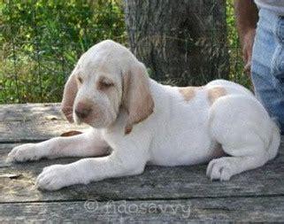 italian puppy names italian names