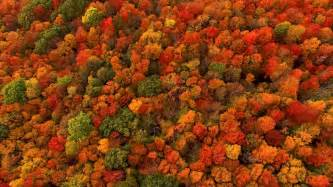 what are fall colors why does fall foliage turn so and fiery it depends