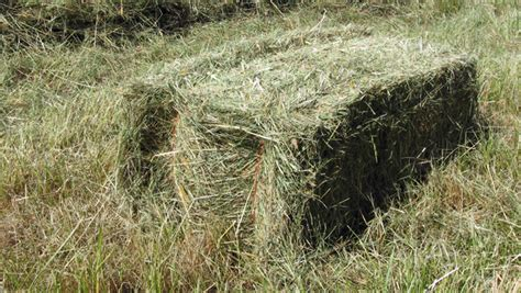 Hay For Horses Part 1